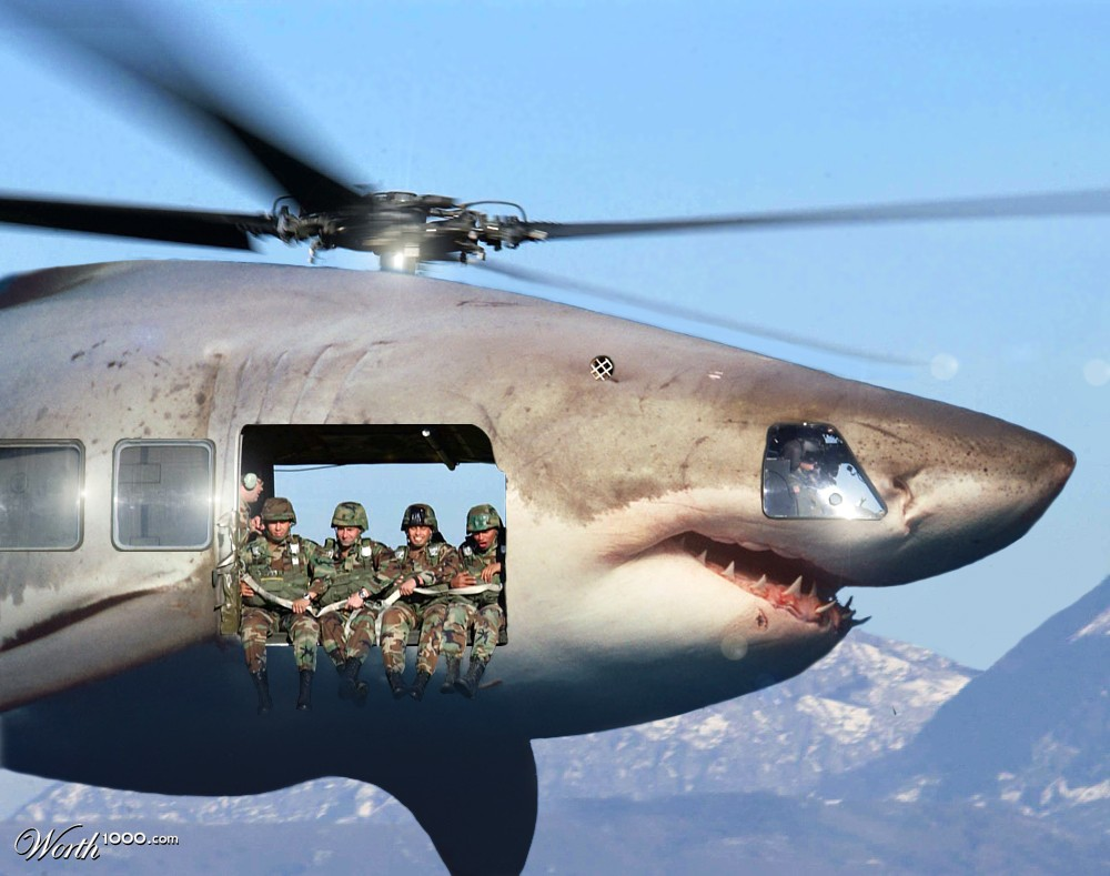 Great white shark jumping at a helicopter during training for Great White Shark Jumping At A Helicopter During Training  67qdu